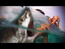 biggest megalodon shark caught on tape megalodon shark on camera epic monster shark