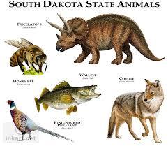 state bird of south dakota state animals of south dakota line art and full color illustrations