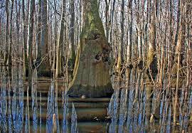 South Carolina national parks images Congaree national park south carolina jpg