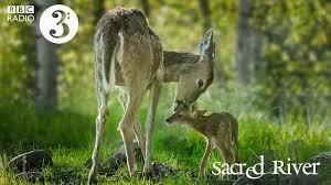 radio hanukkah radio 3 sacred river join us as the day unfolds wildlife