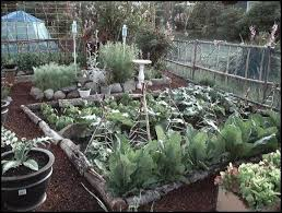 article on plant spacing crop rotation and companion planting