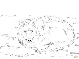 arctic wolf laying on snow coloring page free printable coloring