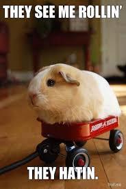 Funny Animal Memes - image top 25 best funny animal memes jpg animal jam clans wiki