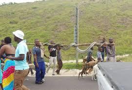 sle resume journalist position in kzn wildlife ezemvelo accommodation video shows kzn residents carrying 5m python alongside n2 news24