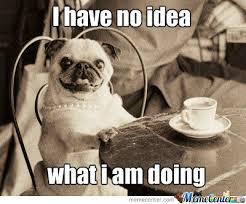 Funny Pug Memes - 50 funny pug memes best funny pug pictures