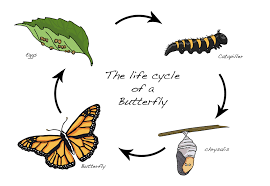 butterflies the cycle of a book writing ie