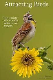 23 best gardening for birds images on pinterest for the birds
