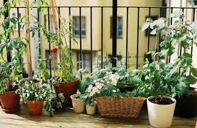gem se pflanzen balkon gemüse auf dem balkon anbauen welche gemüsesorten sind geeignet