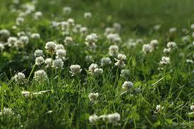 the lazy lawn uconnladybug u0027s blog