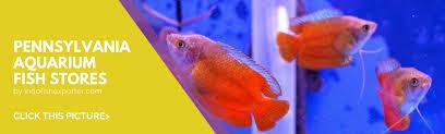 list of pennsylvania tropical fish stores pennsylvania aquarium