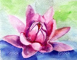 watercolor sketch of lotus stock vector art 672489674 istock