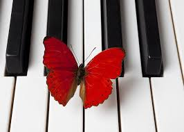 red butterfly on piano keys greeting card for sale by garry
