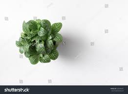 top view plant pot isolated on stock photo 522044431 shutterstock