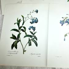 Floral Prints by Botanical Floral Prints Set Of 5 Blue Redoute