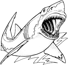 incredible great white shark coloring pages around different