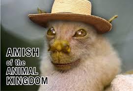 cute funny animals and amish team jimmy joe