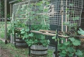 Pvc Pipe Trellis Arbors And Trellises