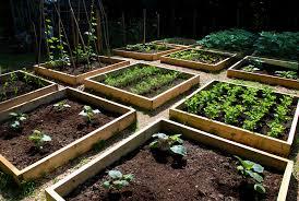 unique modern vegetable garden progress in the raised bed