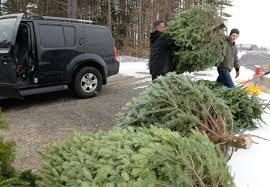 christmas trees ground into mulch for broadalbin nature trail