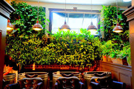Vertical Gardening Planters Living Walls Indoor Environmental Systems Inc