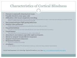 Clutter Blindness Vanessa Vasconcelos Amanda Annulli Tara Sevinsky Ppt Download