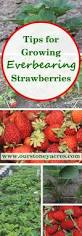 17 best images about fruits berries nuts on pinterest