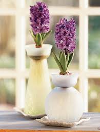 How To Grow A Bulb In A Vase The Gentle Art Of Forcing Bulbs Sunset
