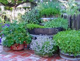 drought strategies for vegetable gardening u2014 seed savers exchange