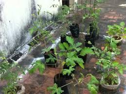 vegetable roof garden organic youtube