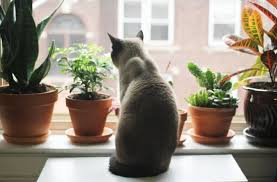 protect your pets frankie flowers grow eat live outdoors