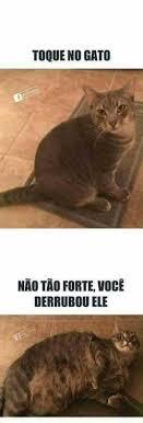 Gato Meme - dopl3r com memes toque no gato nao tao forte voce derrubou ele