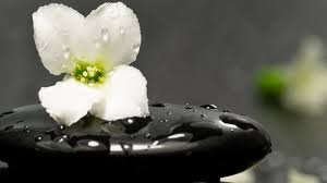 spa images hd white flower on a spa stone