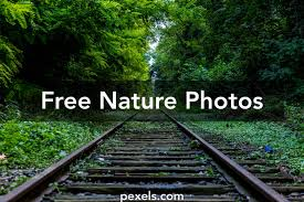 nature images pexels free stock photos