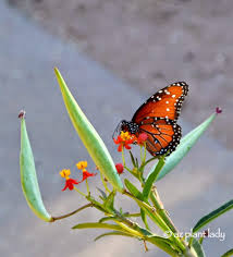 butterfly gardening for the southwest garden ramblings from a