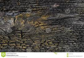 old black gold bark wood background wall texture stock photo