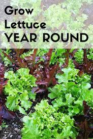 300 best how to grow vegetable garden images on pinterest
