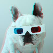 bulldog with 3d glasses photograph by retales botijero