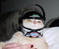 Tu gato tocó el boton power y se te apago la pc? Entrá