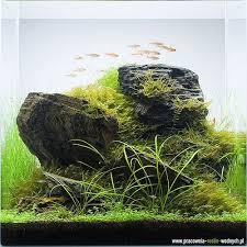 Aquascapes Of Ct 917 Best аквариумистика Images On Pinterest Aquarium Fish