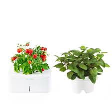 plants that don t need light 100 kitchen plants that don t need sunlight shade tolerant