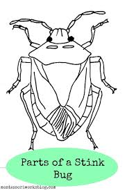 parts stink bug practical