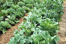 5 tips for a bountiful water saving vegetable garden in a time of