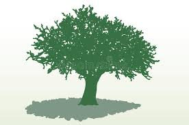 wide tree shadow royalty free stock photo image 11758575