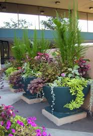 awesome flowers for container gardening 347 best images about