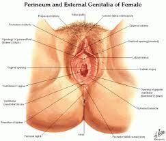 Female Urinary System Anatomy Male Anatomy Diagram Male Rectum And Hernias