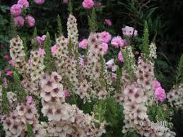the weekly bloom week of june 12 denver botanic gardens