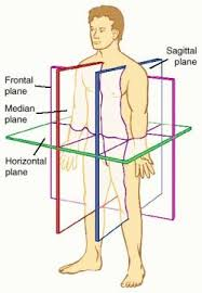 Anatomy And Physiology Human Body Anatomy U0026 Physiology