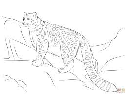 snow leopard coloring page free printable coloring pages