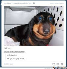 Hot Dog Meme - like a hot dog by schnibbie12 meme center