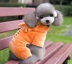 dog halloween costume fleece small dog clothes garfield jumpsuit pajamas coat pet